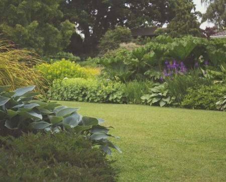 groene eigen tuin ontwerpen planten